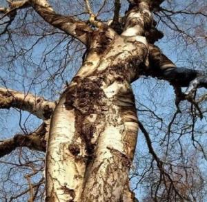 5b91b5f926101-femmes-arbres-mystere-sept2018